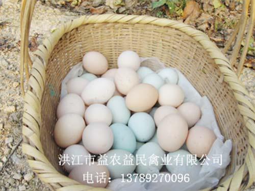 雪峰乌鸡鸡蛋