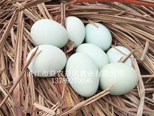 山猫直播体育鸡蛋